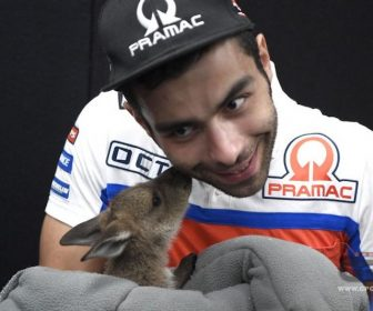 petrucci-canguro